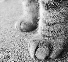 Paws by Lissie E J