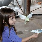Capturing a special moment with the  Budgie parakeets... by DonnaMoore