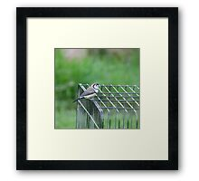 Outside the Wire  Framed Print