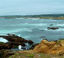 Scenic Monterey Peninsula 17-mile Drive by K D Graves Photography