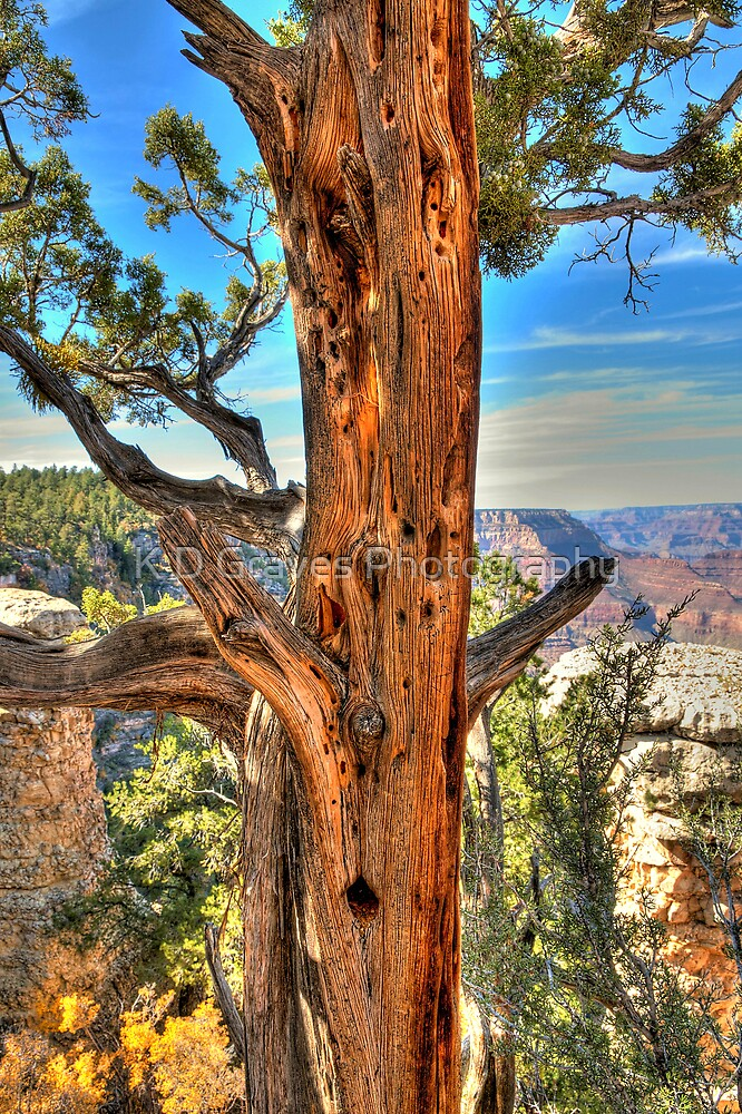 Tree Of Ages In The Grand Canyon by K D Graves Photography