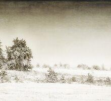 Winter Landscape by Dobromir Dobrinov