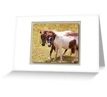 There's nothing phony about a Shetland Pony Greeting Card