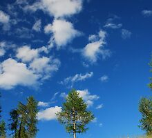 Trees with Cumulus Fractus by jojobob