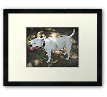 Girl - The Staffy Framed Print