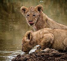 Lion Cubs by Robert van Koesveld