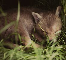 A tiny visitor, asleep in the grass. by ellylucas
