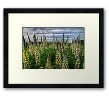 Valley Delight Framed Print