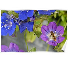 Hoverfly and Flowers Poster