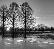Cypress in Ice by njordphoto
