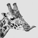 Cheeky Giraffe by Mark Hughes