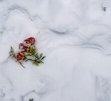 A Love Frozen in Time by Dennis Maida