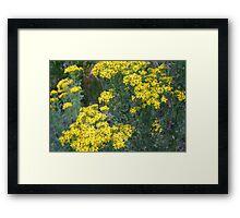 """Washington Wildflowers"" Framed Print"