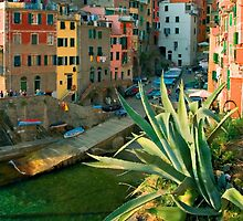 Italy. Cinque Terre - Canal side close up by JessicaRoss
