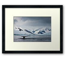 Whale Tail Antarctica Framed Print