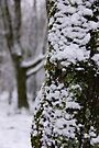 Forest Winter Perspective.. by NatureGreeting Cards ©ccwri