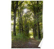 Beech lane in autumn Poster
