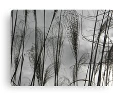 a.a. Canvas Print