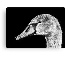 Swan Black & White Canvas Print