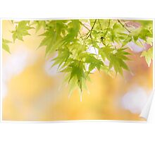 Dreamy Acers (landscape) Poster