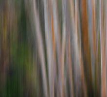 Aspen Tree Abstract by Floyd Hopper