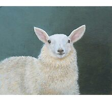 Portrait of Ewe Photographic Print