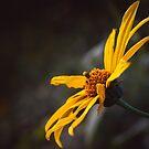 Yellow by Brooke Winegardner