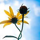 Wildflower by Brooke Winegardner
