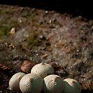 Fungi 1 by Brooke Winegardner