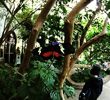 Buttefly by rbestphoto