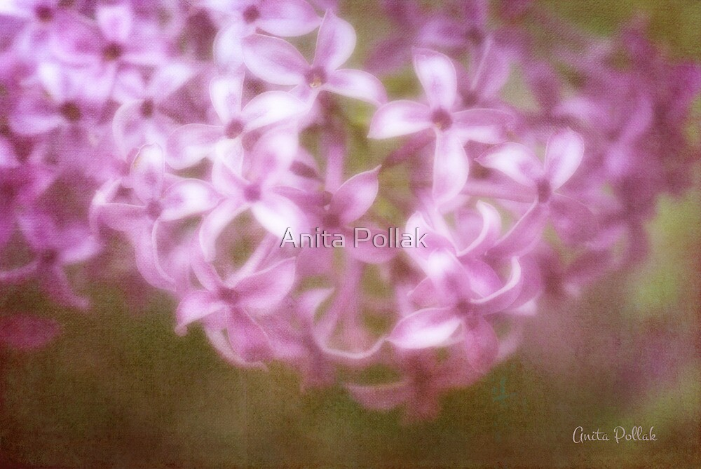 Painted Lilacs by Anita Pollak