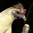 Wow!! I Need That One Mum... Hen And Chick - NZ by AndreaEL