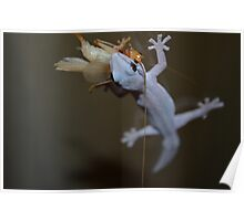 Macro Lizard Eating Insect Poster