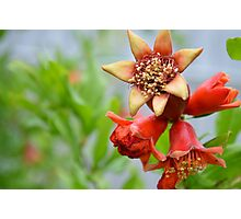 Red flower on green apple tree Photographic Print