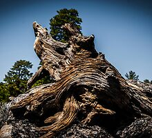 Close up of a weathered, textured tree stump  by PhotoStock-Isra
