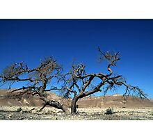 Dead and dry solitary tree in the desert Photographic Print