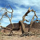 Dead and dry solitary tree in the desert by PhotoStock-Isra
