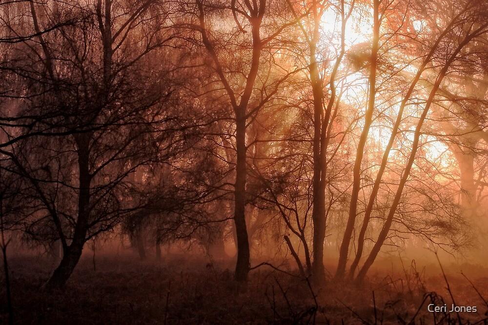 Autumn Misty Woods by Photokes