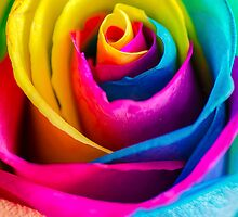 Rainbow Rose by MMPhotographyUK