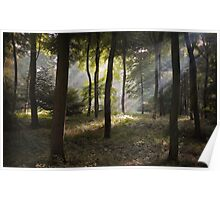 Sunlight in the Woods Poster