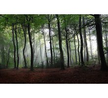 Summer morning Woods Photographic Print