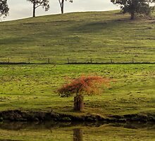 Golden Valley Reflections, Balingup, Western Australia by Elaine Teague