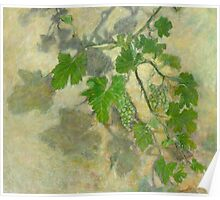 Grape vine with leaves and clusters of grapes Poster