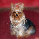 Little Miss Pebbles by Grinch/R. Pross