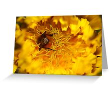 Waiter There's A Fly In My Dandelion! Greeting Card