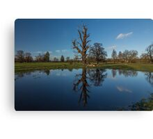 Reflection of tree Canvas Print