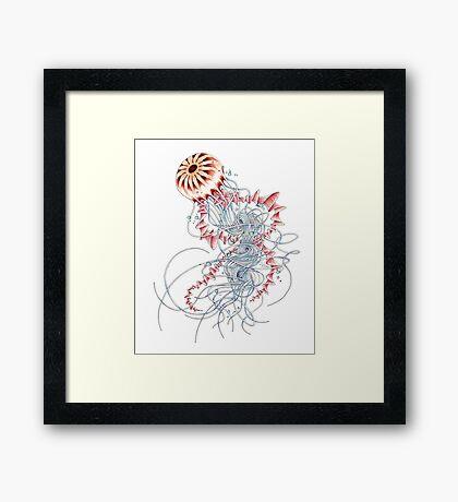 Chrysaora hysoscella Framed Print