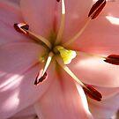 Macro Lily by WildestArt