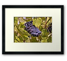 Grapes of Chianti Framed Print