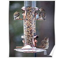 Busy Day at the Feeder Poster